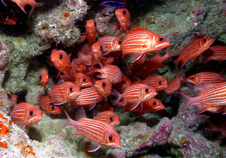 Papah naumoku kea marine national monument for School of fish