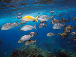 Sealife abounds on the pristine reefs in the Monument.