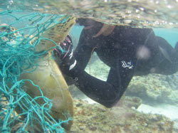 Diver cutting turtle free of discarded fishing net.