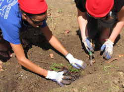 Planting native, low-lying shrubs of ʻākulikuli.
