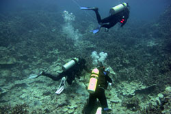 A dive team conducting coral and fish disease surveys and plankton tows.