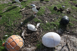 The tsunami swept across Midway Atoll's Eastern Island spreading plastic debris and killing thousands of birds.