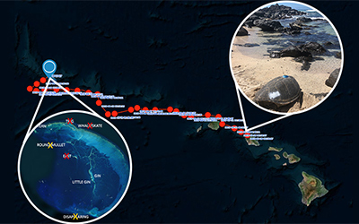 The satellite track of Motherload's journey of more than 600 miles from O'ahu to French Frigate Shoals.