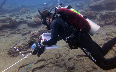 NOAA diver Dr. John Burns surveys coral health at Lehua by visually documenting individual coral heads; he will then create 3D models and photomosaics of the survey sites. 9/7/17