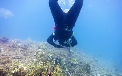 UH-Hilo QUEST student Keelee Martin documents the size, species and health of adult and juvenile coral colonies at French Frigate Shoals.