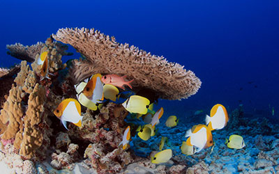 A coral reefscape and variety of fish swimming at French Frigate Shoals.