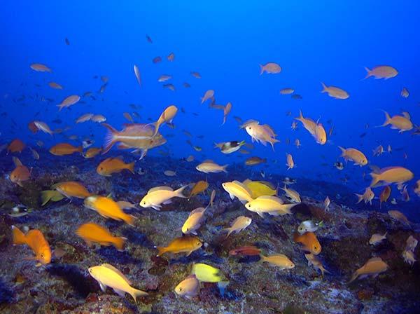Papah naumoku kea marine national monument for Community saltwater fish