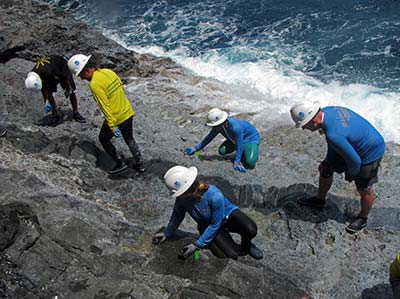 Researchers count ʻopihi along the rocky shorelines of Nihoa during 2015 expedition.